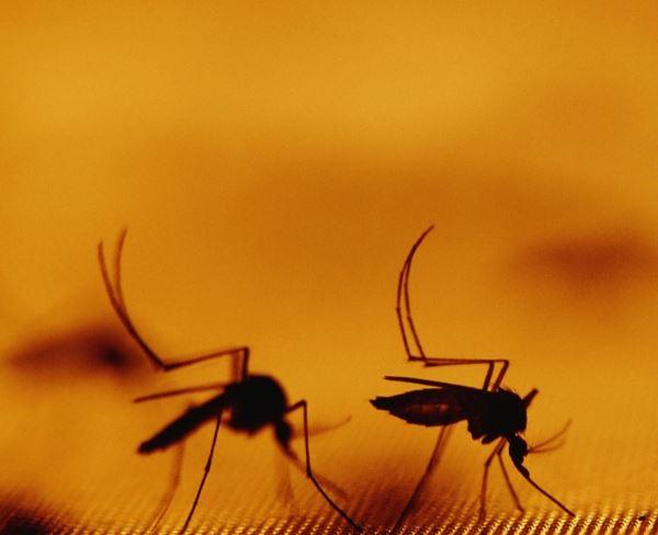 Malárie: Zabiják lidí i ekonomického růstu