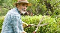 Kolik si můžete vydělat v předčasném důchodu