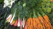 Na farmářských trzích se loni protočila miliarda