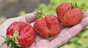 Slasti a strasti farmářských trhů. Díl druhý – strasti