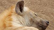 Jak na hyeny z předváděcích akcí? Právník radí