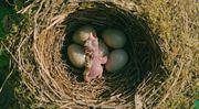 Domácí porody: ODS natrhla hráz vlastním principům, Šichtařová statistice
