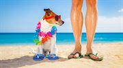 Sbohem moře, sbohem dovolená! Pojišťovny nechtějí pojišťovat cestovní kanceláře