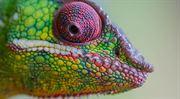 Chameleoni. Klamou názvem, aby na vás vydělali