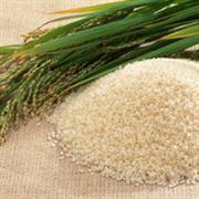 Zátah na překupníky kvůli rýži za tisíc dolarů