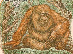 Ministrova zbrusu nová opice