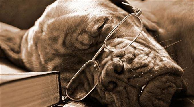 Svatba, nebo život na psí knížku? Co se víc vyplatí?