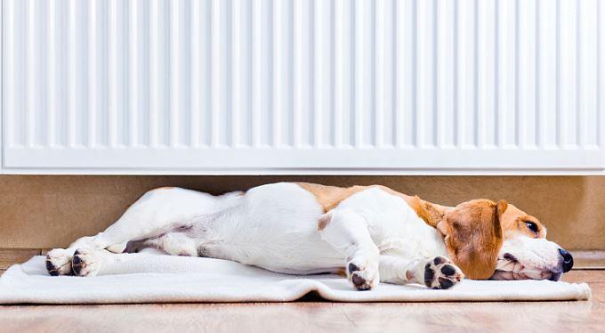 Nová povinnost pro majitele bytů: Měřte spotřebu tepla