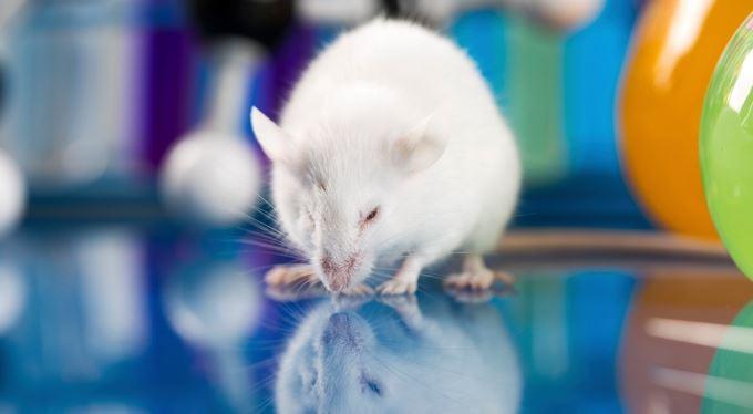 Facebook. Myšičko, a co teď?