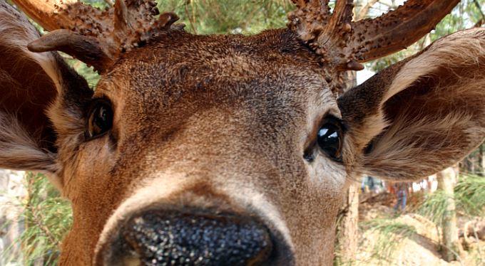 Pozitivní zprávy: Zlý jelen vs. instalatér – 20 : 0