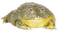Michal Hašek je žába! Na prameni informací
