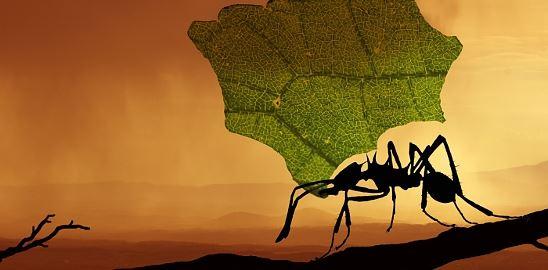O cvrčcích, mravencích a obchodní bilanci