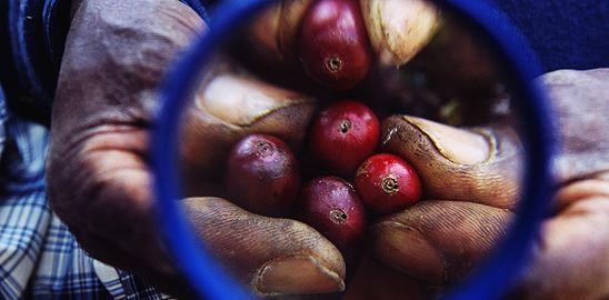 Fair trade nebo Free trade?