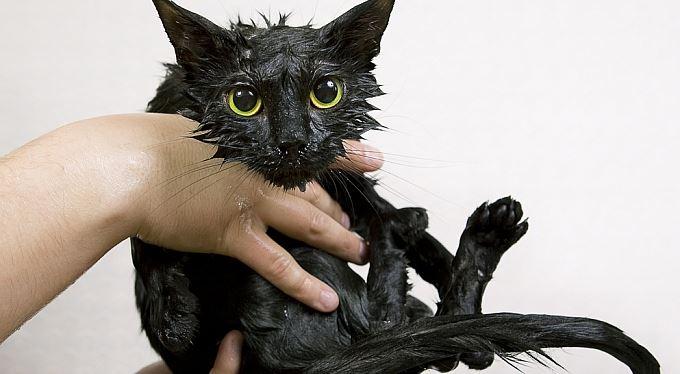 Pozitivní zprávy: Sušení koček v mikrovlnce má důstojného soupeře