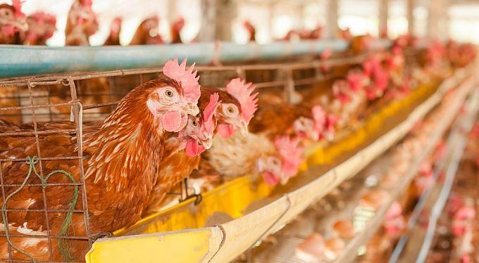 Ptačí perspektiva aneb regulací za přirozenější rozhodování