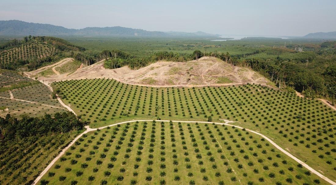 Palmový olej je zlo. Žádný palmový olej je ještě větší zlo