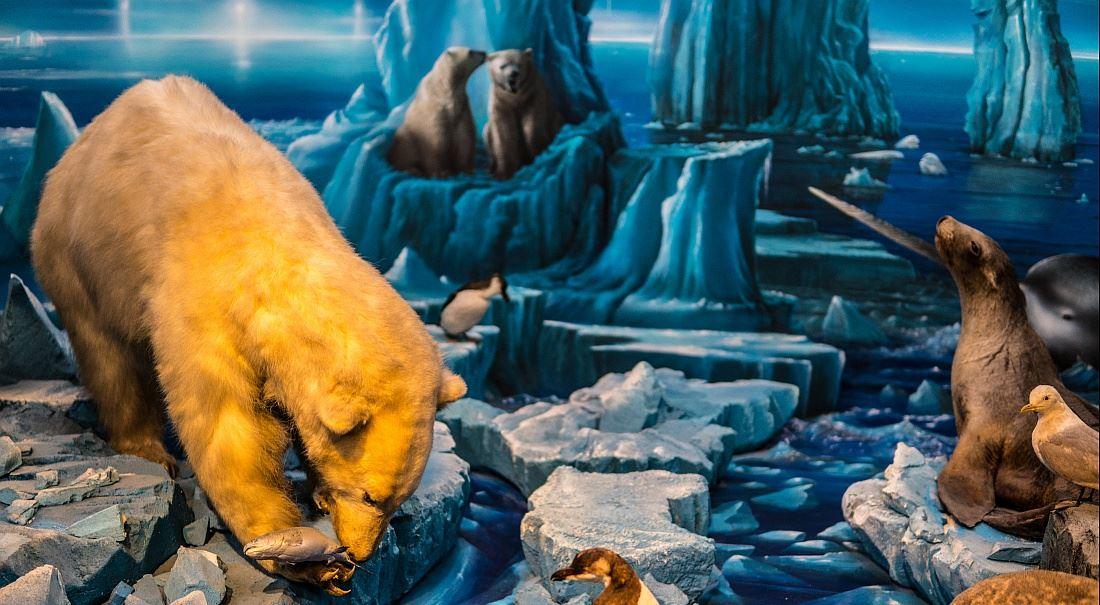 První oběť globálního oteplování? Pravda!