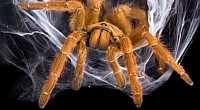 Webové podvody: držte si šrajtofli, v síti sítí není bezpečno!