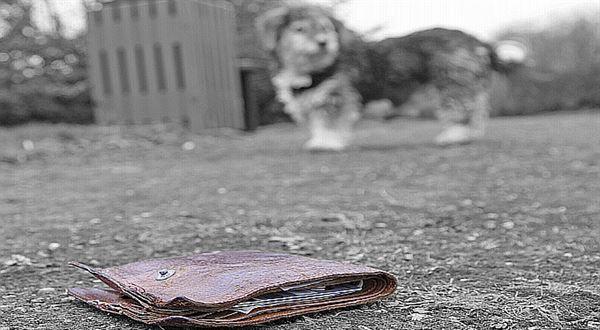 Ztráta, odcizení nebo zničení dokladů: podrobný návod, jak postupovat