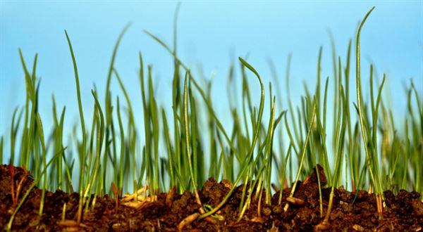 Existuje alternativa? Investice do půdy v Česku