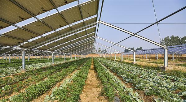 Agrivoltaika – nová éra fotovoltaiky vČesku