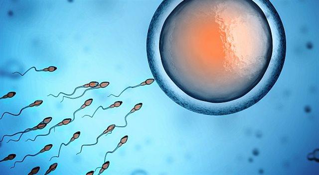 Kalkulačka: Porodné v roce 2017. Spočítejte si, jestli máte nárok