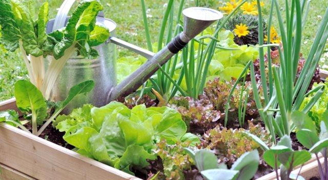 Tipy pro dobré hospodáře. Aby zahrada nesla užitek a moc nestála