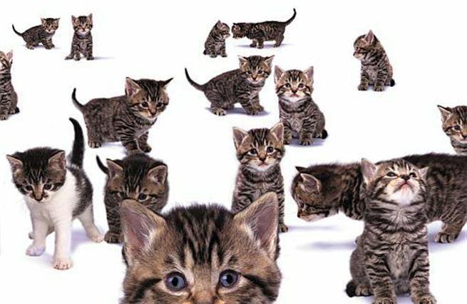 Dohoda pro kočku