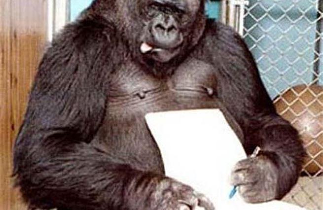 Umění jako monkey business