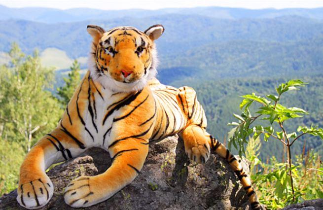 Pozitivní zprávy: Populační exploze plyšových tygrů