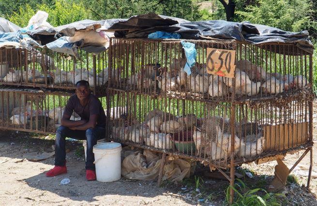Nápady za bilion. V Zimbabwe není spoleh na nic – kromě lidského důvtipu