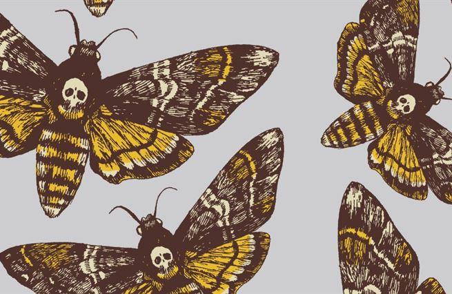 Jak to dělají motýlci