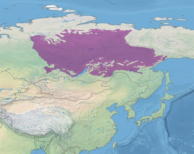 Rozloha sibiřské tajgy
