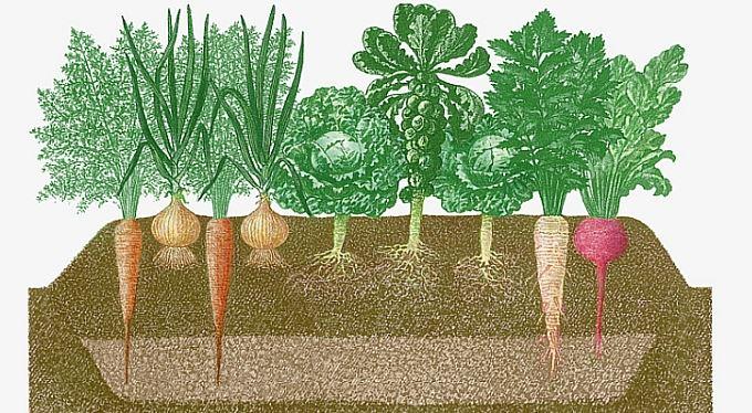 Zahradníkův rok 2012