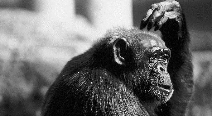 Opice vydělá na burze víc než analytici