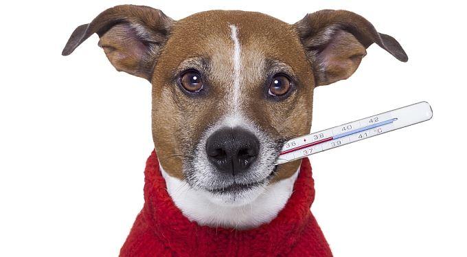 Cestovní pojištění psa: Mazlíčkům se smůla nevyhýbá