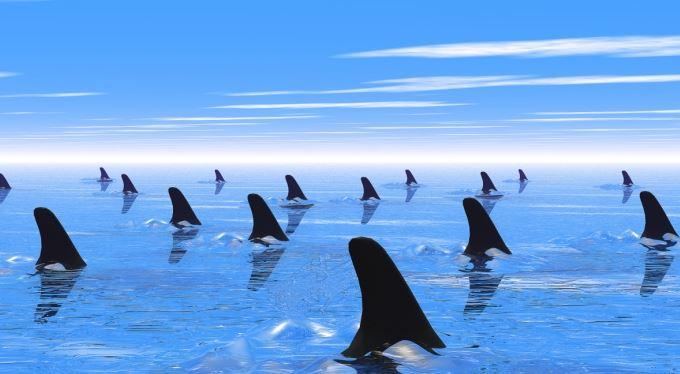 Moře se vaří! Úvěrových žraloků přibývá