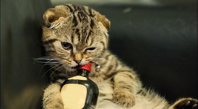 Všichni na zákaz pití kašlou? Zakážeme ho znovu a víc