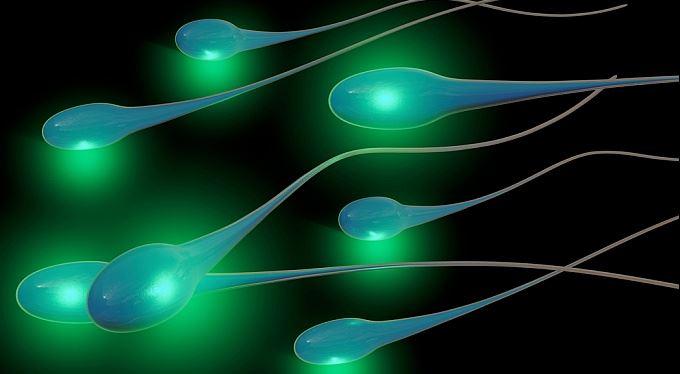 Spermie za pět set, vajíčka za dvacet tisíc… Kolik vyděláte na vlastním těle