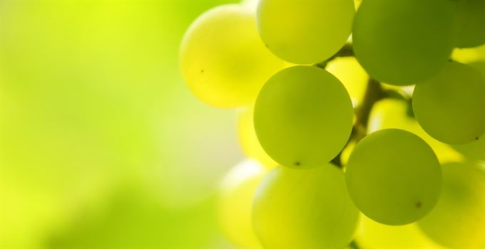 Jak roste drahé víno