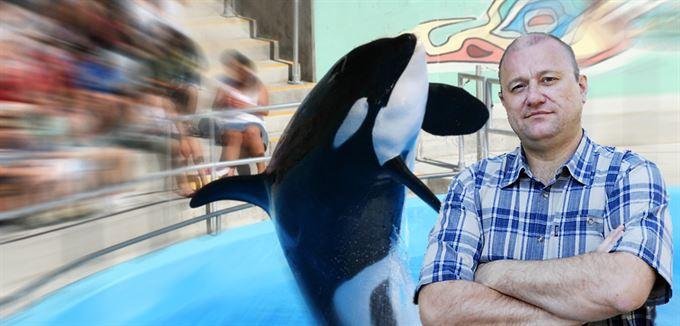 Žralok a velryba