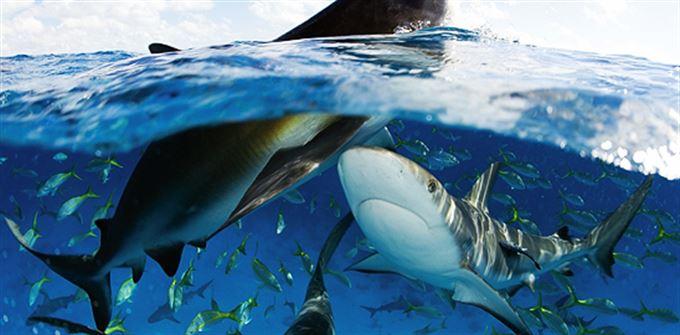 Naučte se plavat se žraloky