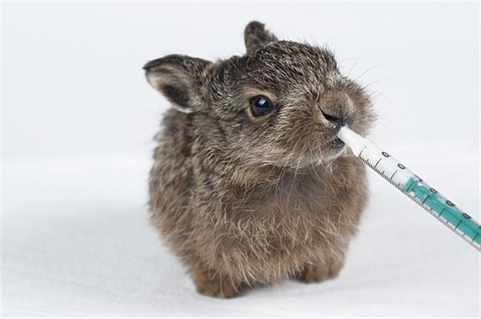 Zase krize: O králíčkovi, který chtěl koňskou injekci