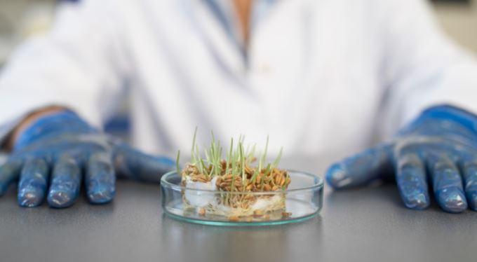 Konspirační teorie: Geneticky modifikované potraviny