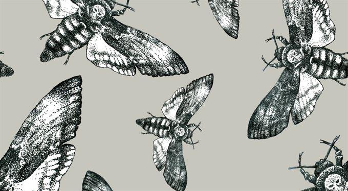 Hmyzokalypsa je skvělý příběh. Ale co na to fakta?